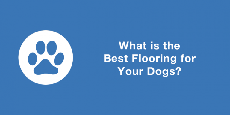 https://www.mpglobalproducts.com/blog/what-is-the-best-flooring-for-your-dogs/What is the best flooring for your dogs? Blog Article